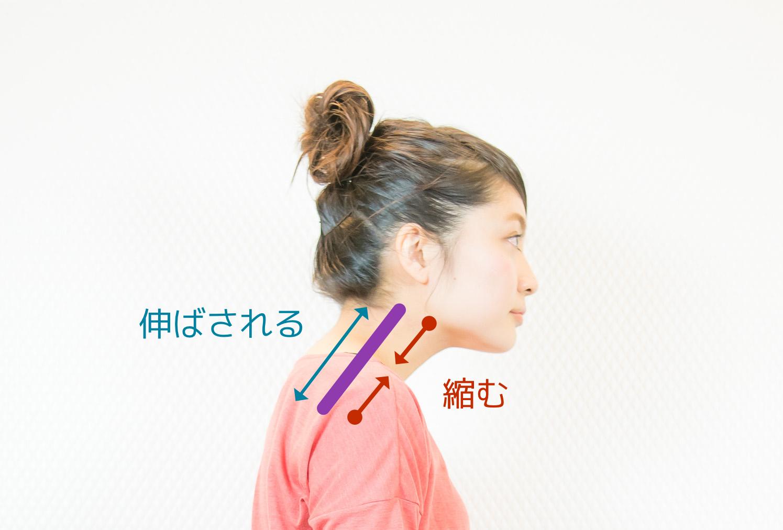 頭が前に出ると首の後ろの筋肉が伸ばされる