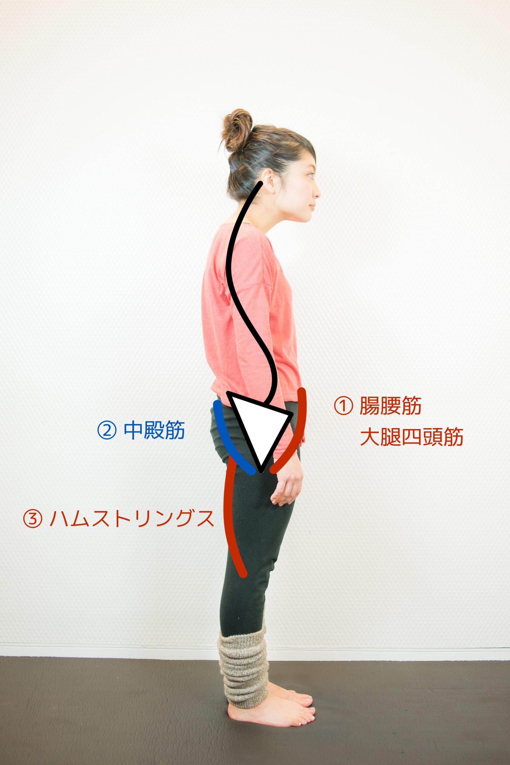 姿勢不良で固くなりやすい筋肉