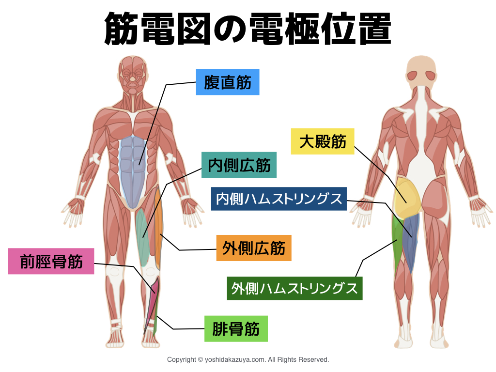 筋電図の電極位置